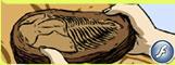 La fossilisation