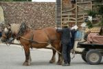eco16_cheval
