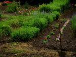 eco6_jardin
