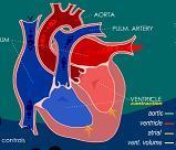 biologie en flash - coeur - vignette
