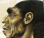 tautavel vignette homo erectus
