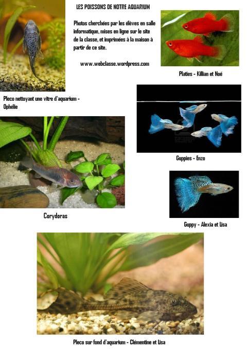Les poissons de notre aquarium